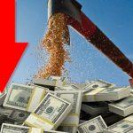 Ca�da en liquidaci�n de divisas del sector agro exportador