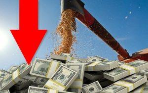 Caída en liquidación de divisas del sector agro exportador